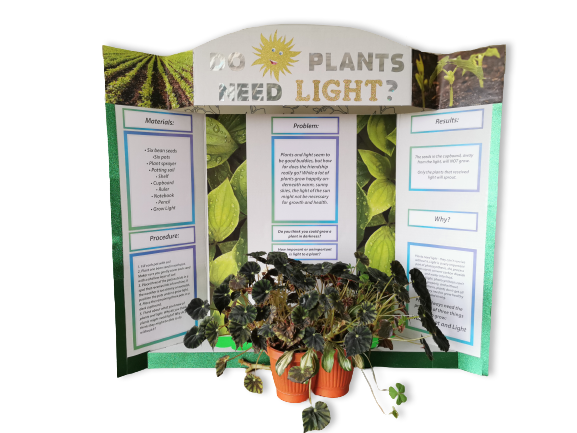how-to-make-science-fair-project-plants