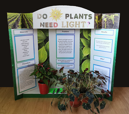science-fair-project-ideas-plants-need-light