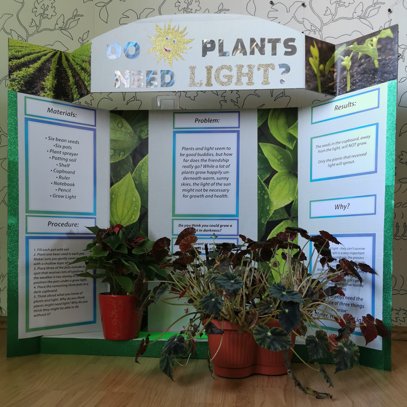 science-fair-project-plants-light